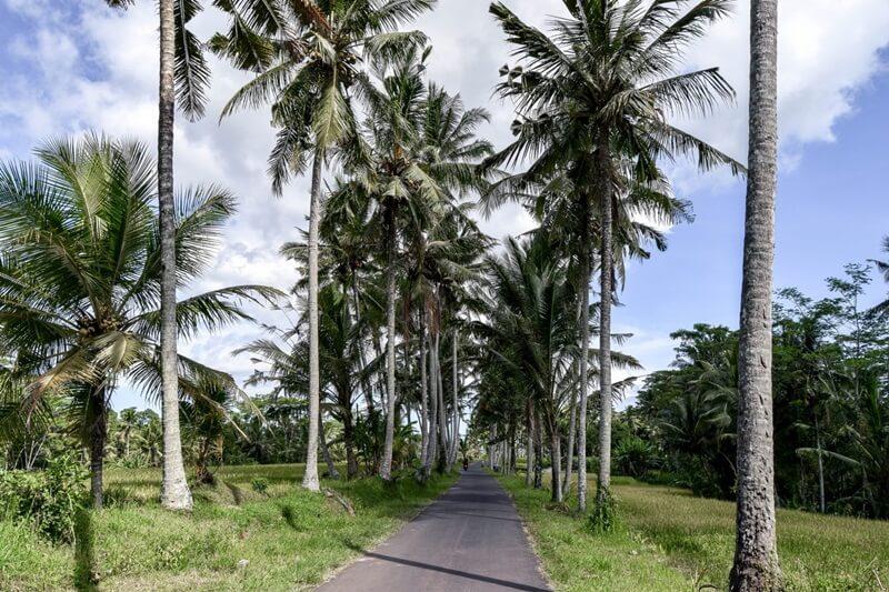 Jalan Utama Menuju AIr Terjun Tibumana
