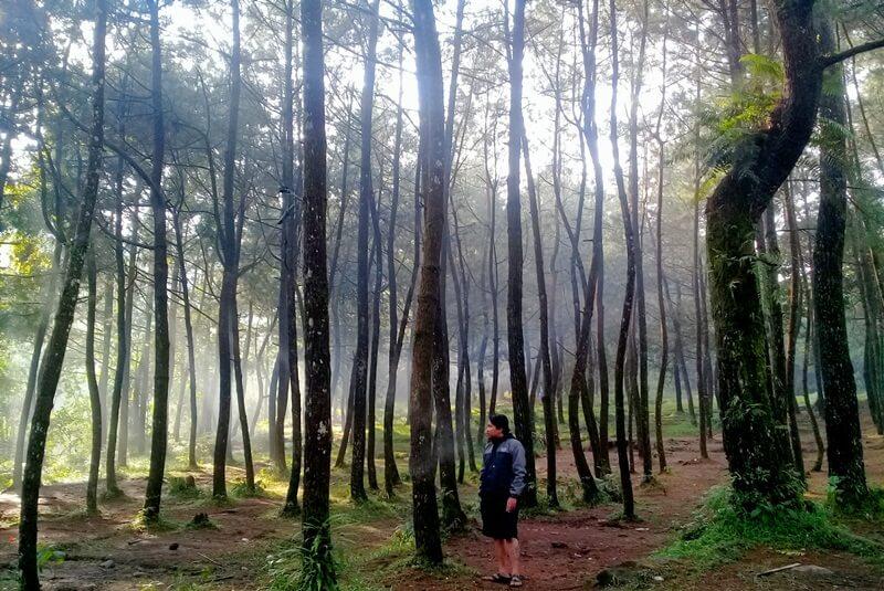 Berfoto Diantara Pohon Pinus