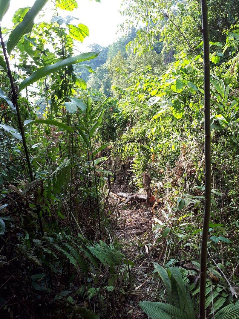 Jalur Trekking Berupa Tanah