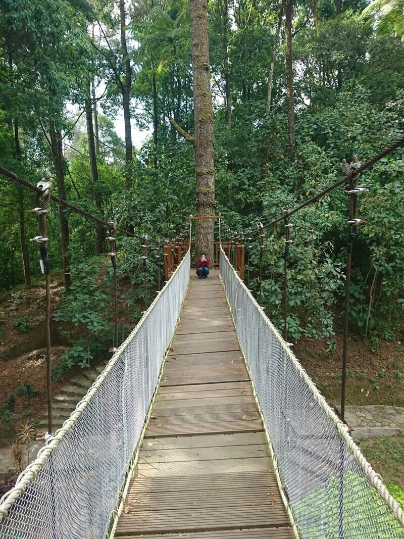 Jembatan Kayu Di Atas Pohon