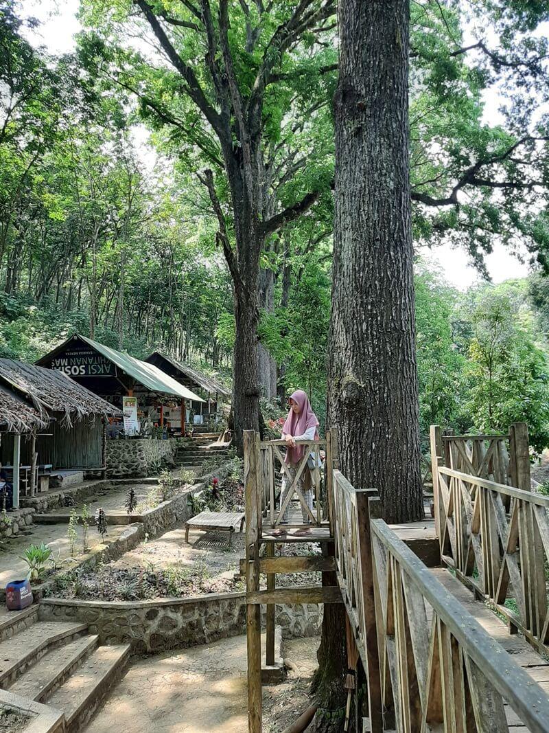 Kantin Dan Rumah Pohon