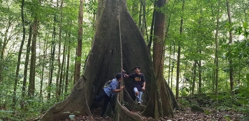 Pohon Damai Simempar