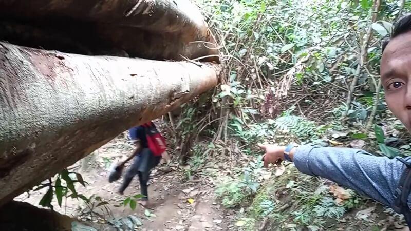 Batang Pohon Di Jalur Trekking
