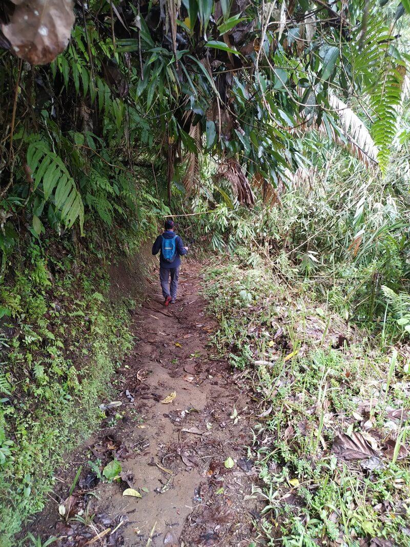 Jalur Trekking Menuju Curug Ciparay
