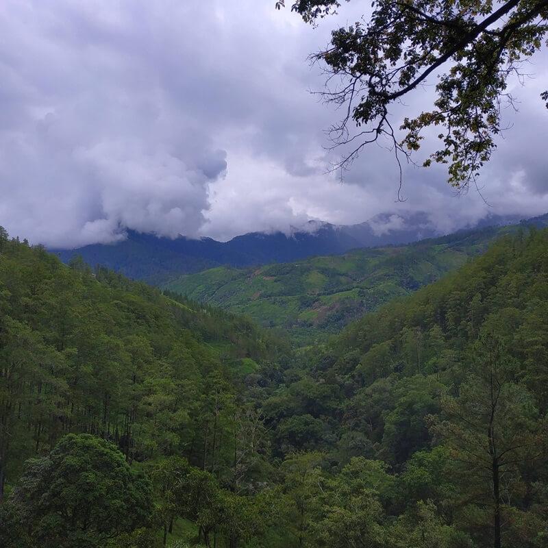 View Di Jalur Trekking