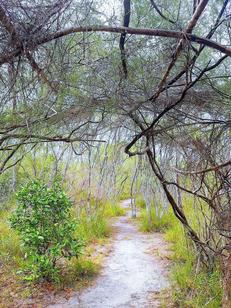 Hutan Kerangas Hutan Cendil Geopark Belitung