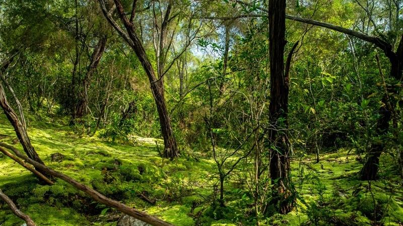 Lumut Hill Atau Gunung Lumut Geopark Belitung