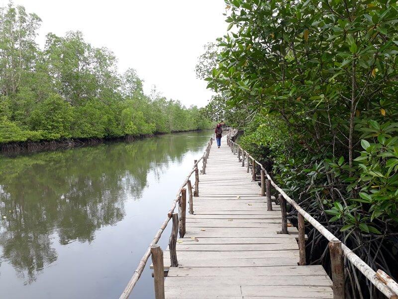 Mangrove Kuale Geopark Belitung