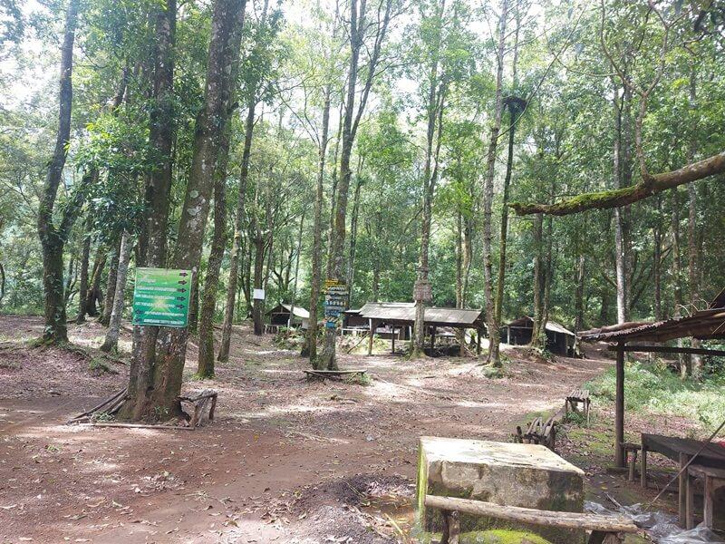 kawasan hutan pinus