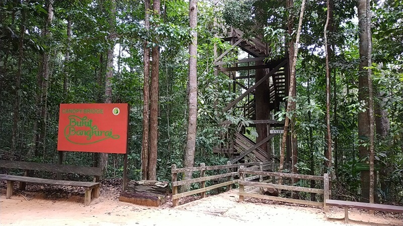 kawasan hutan yang masih rindang