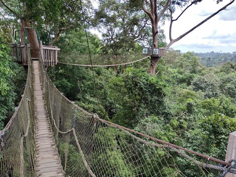 menapaki canopy bridge