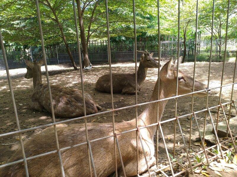 kebun binatang mini