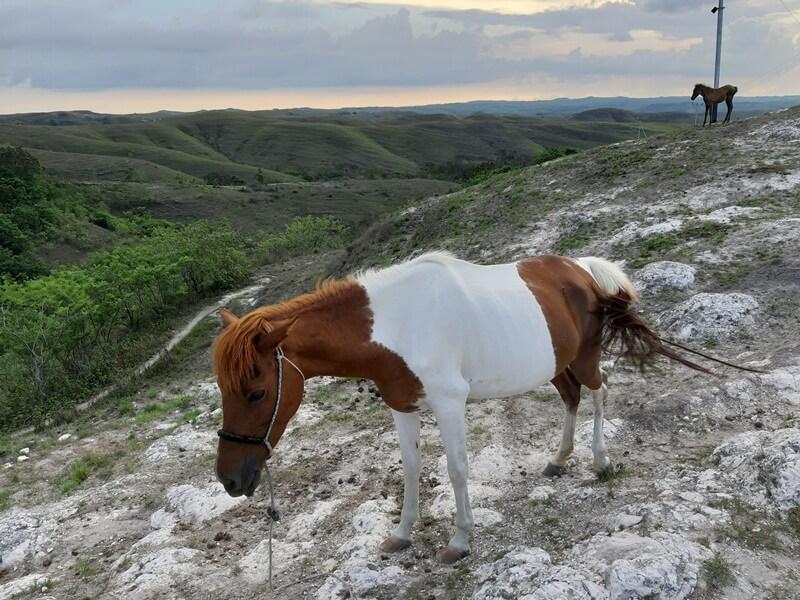 berkeliling bukit dengan menunggang kuda