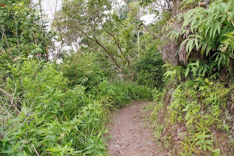 trekking menuju desa wae rebo