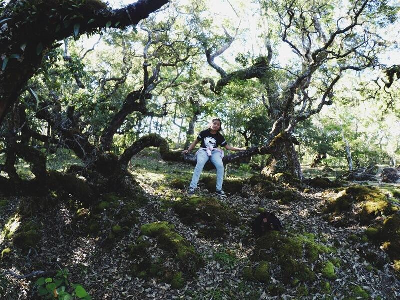 kawasan hutan bonsai