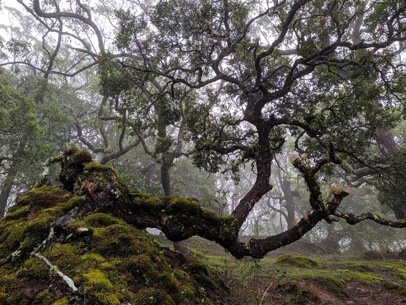 hutan bonsai alam mutis