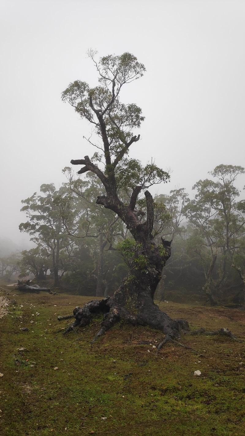 hutan bonsai dengan umur pohon ratusan tahun