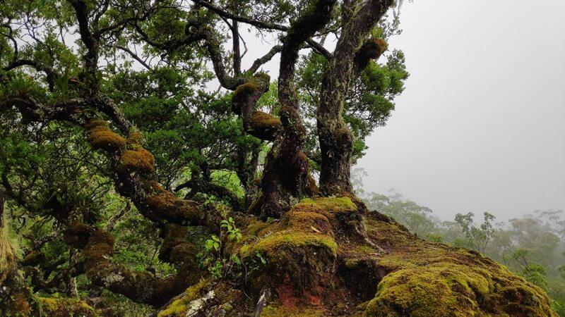hutan bonsai fatumnasi