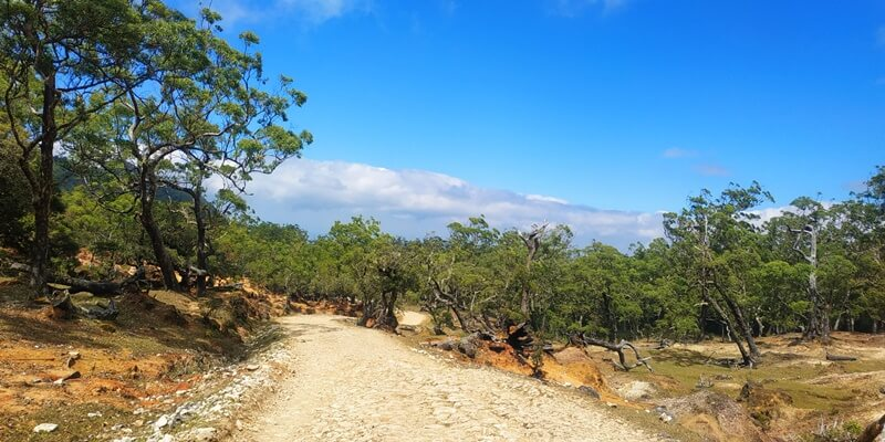 jalan menuju kawasan hutan bonsai