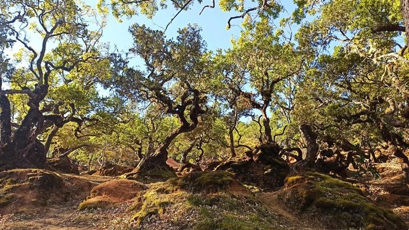 lumut hijau di batang pohon bonsai