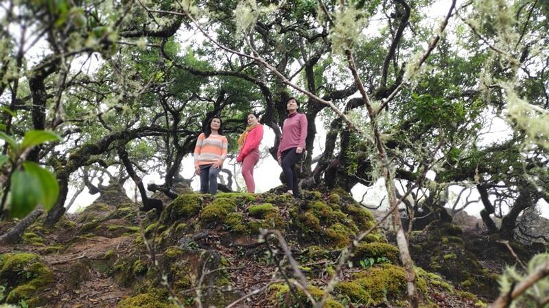 pohon bonsai sebagai latar foto