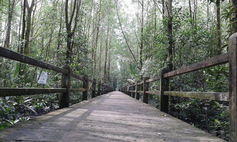 daya tarik hutan mangrove tarakan