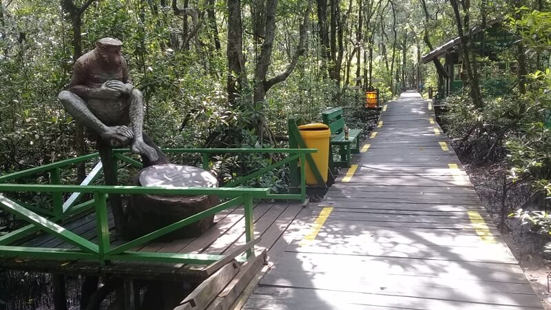 jalur trekking hutan mangrove tarakan