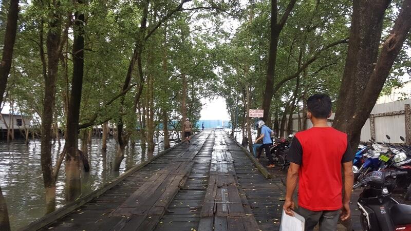 kawasan hutan mangrove tarakan