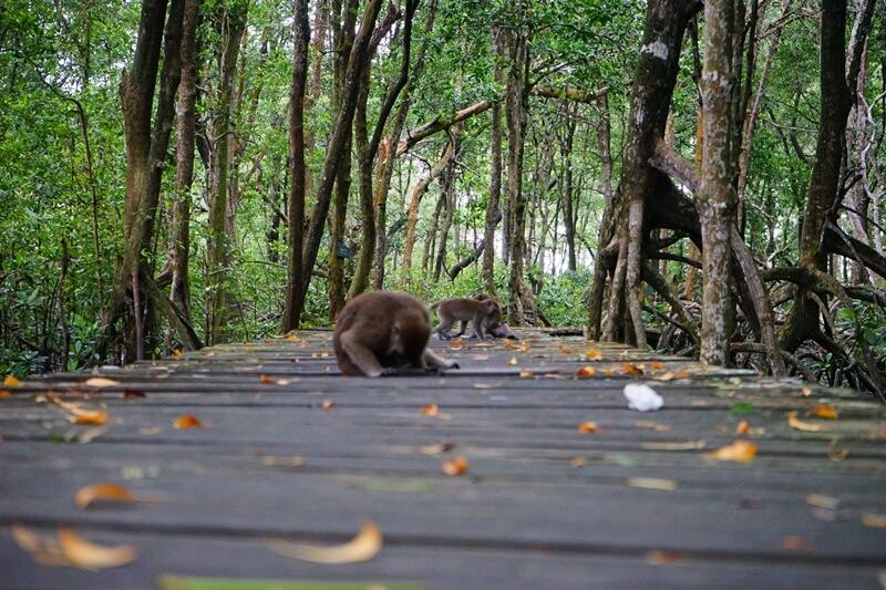 kawasan konservasi mangrove dan bekantan