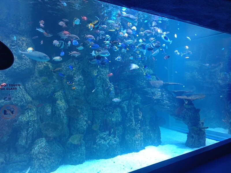 menyaksikan ratusan ikan yang cantik