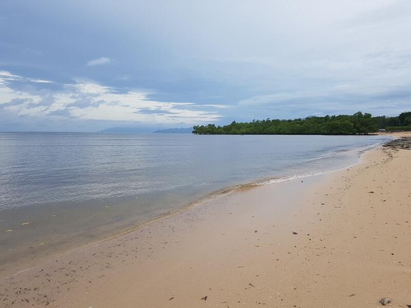 hutan bakau yang cukup lebat