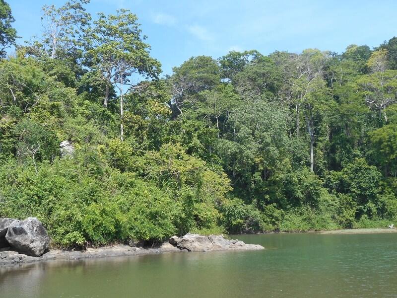 muara sungai dekat pantai bandealit