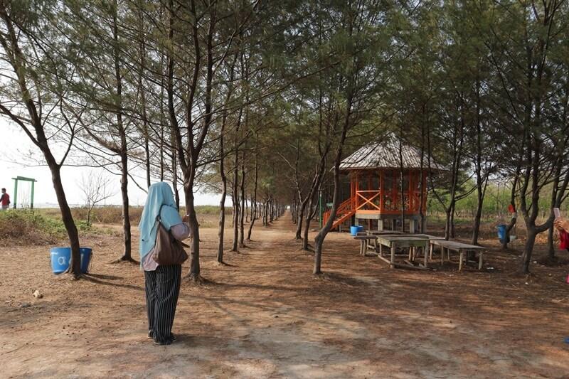 kawasan hutan mangrove karangsong