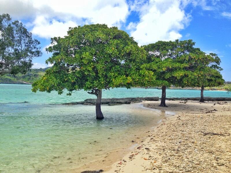 keindahan pantai oeseli