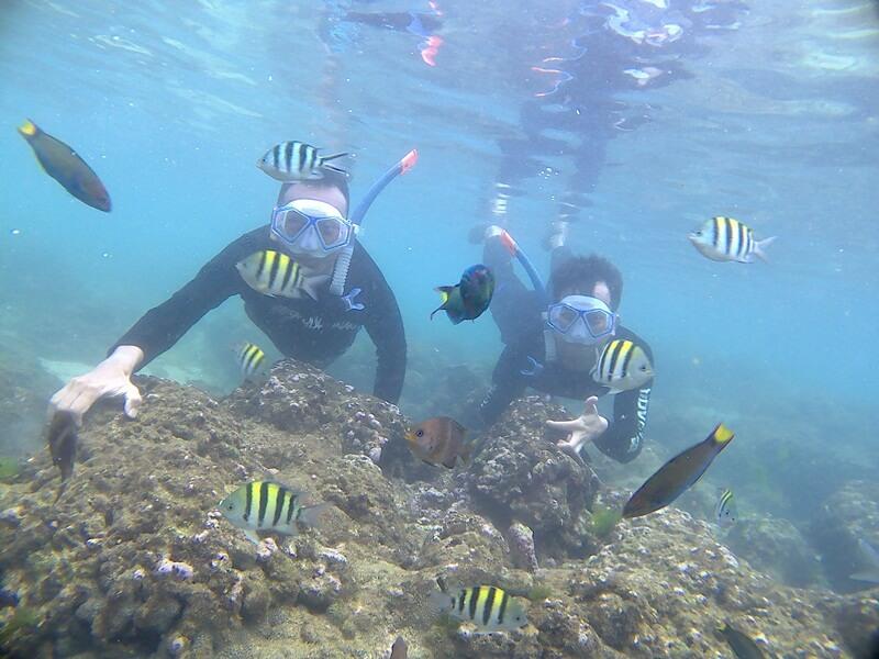 snorkeling yang menyenangkan