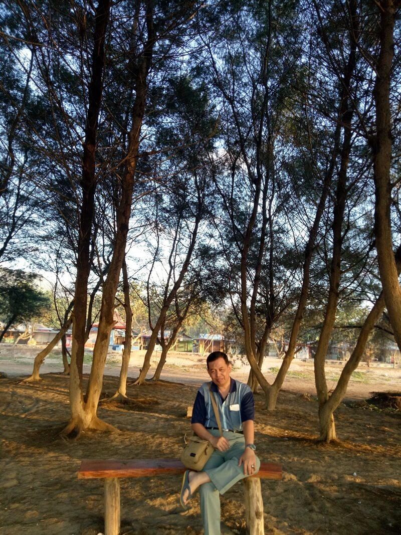 berteduh di bawah pohon cemara