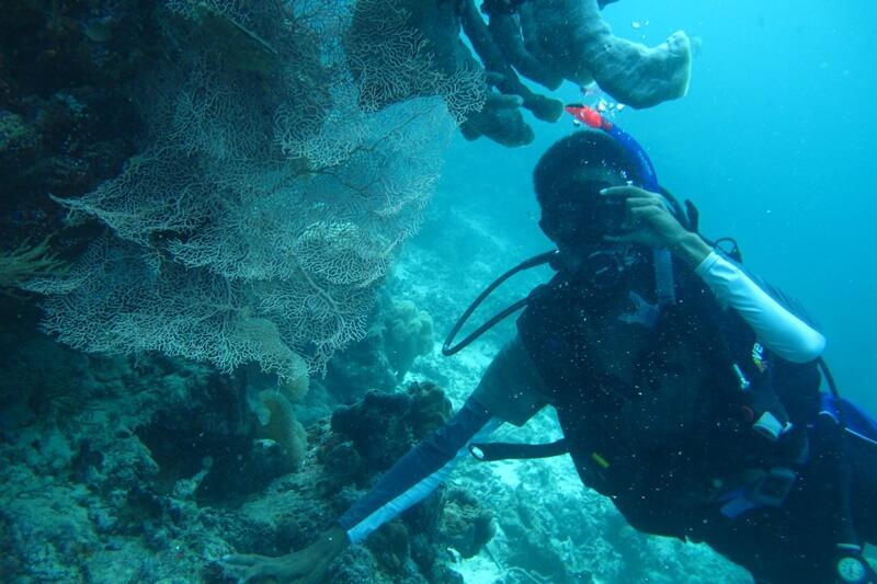 menyelam di pulau hoga