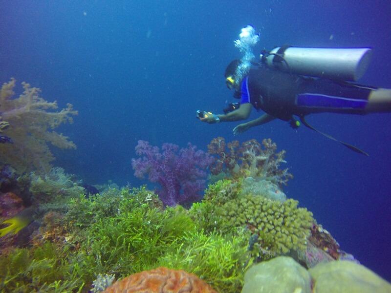 spot diving favorit di wakatobi