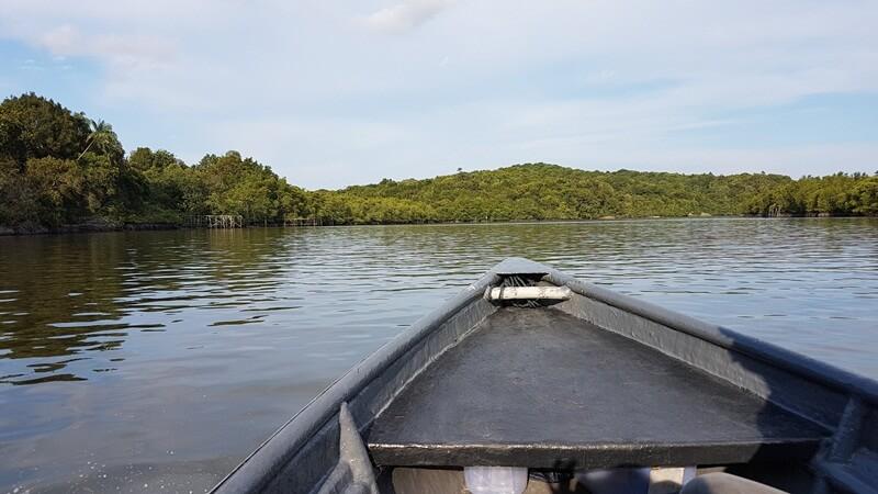menyusuri bintan mangrove