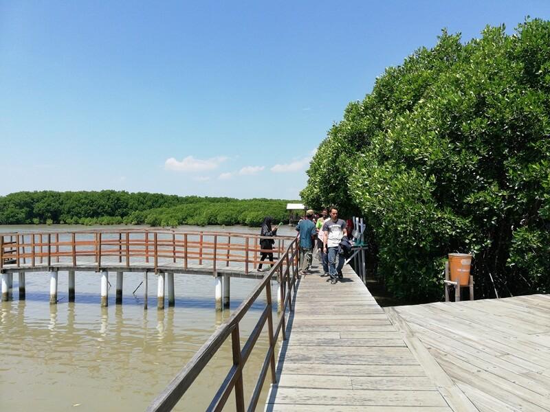 trekking hutan mangrove