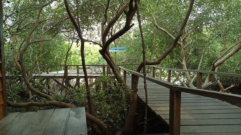 mengelilingi hutan mangrove