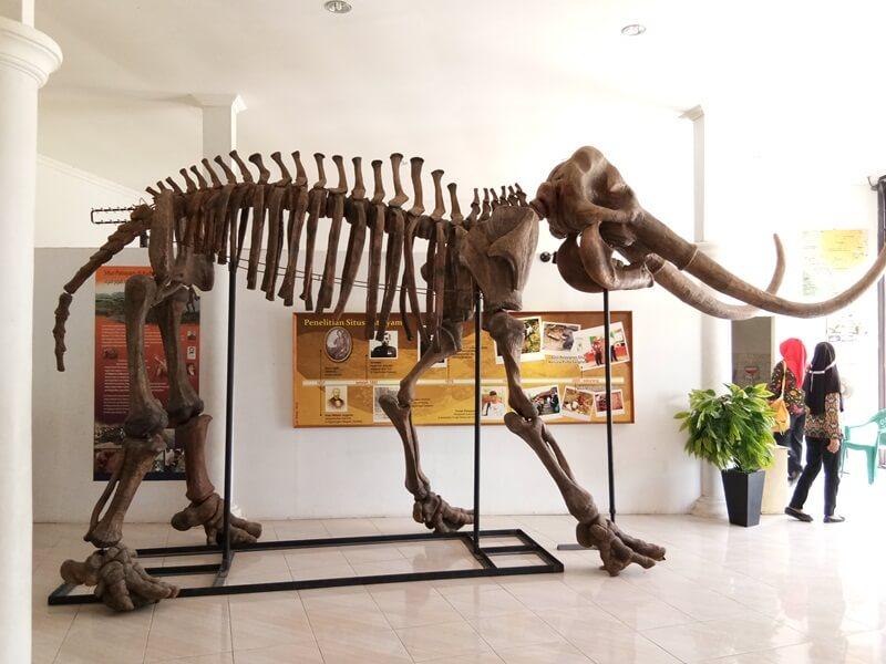 salah satu fosil yang ada