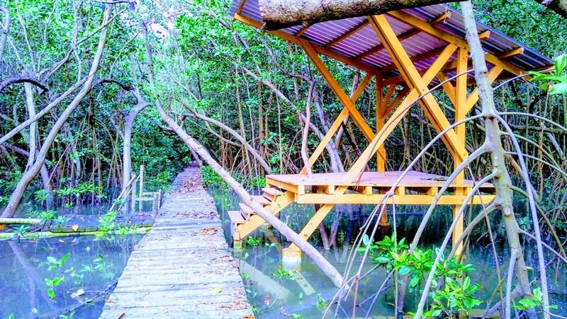 hutan mangrove mojo