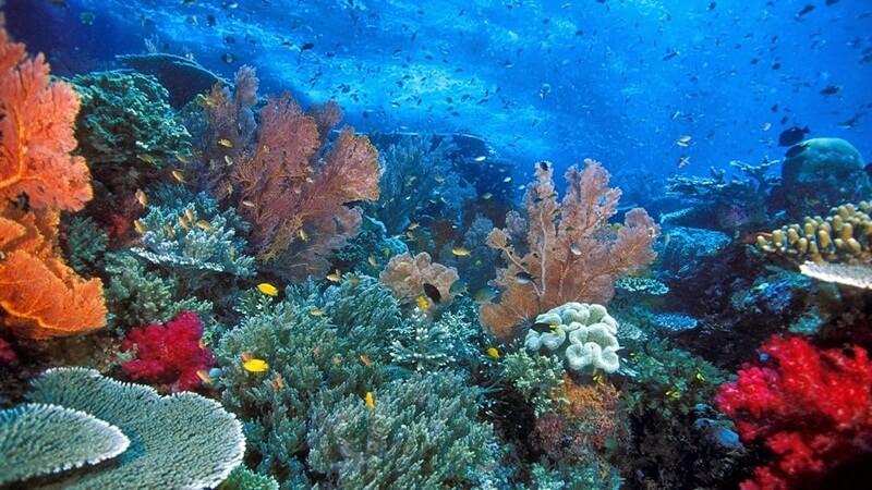 taman laut rubiah