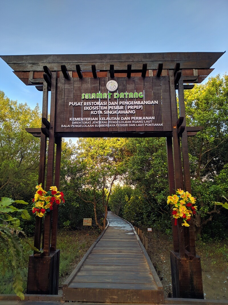 menyusuri hutan mangrove
