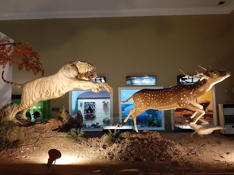 koleksi satwa museum satwa batu jawa timur